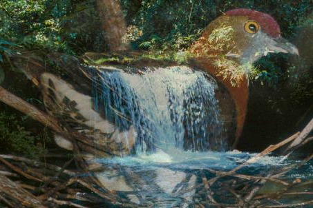 Film: Voices of the Rainforest with Steven Feld