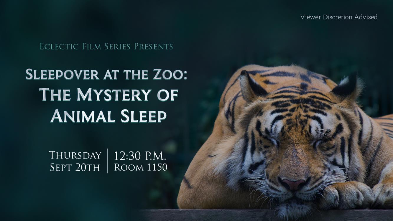 Free Film - Sleepover at the Zoo