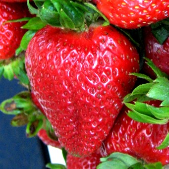 Strawberry Field Day: Pest Management Research