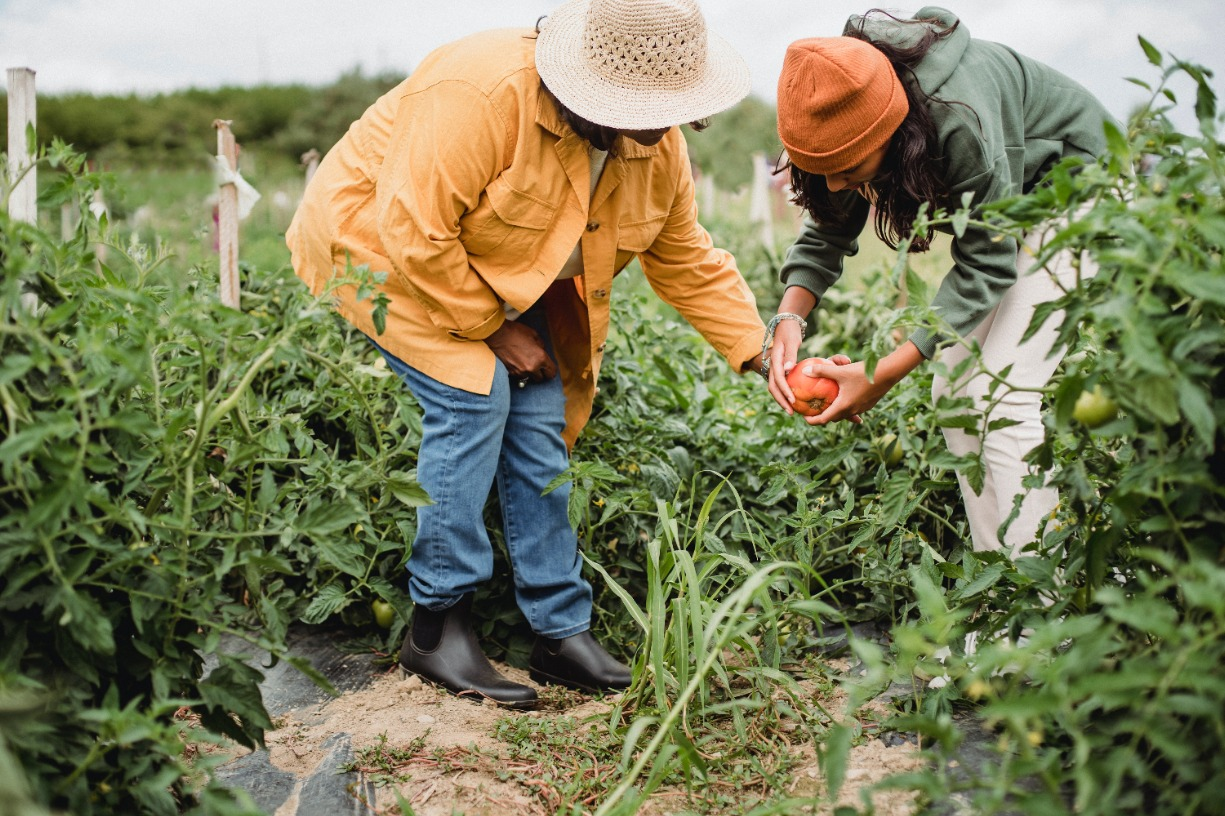 Growing Community Series - Building a Sense of Unity: Gardening's Important Role in Healthy Communities