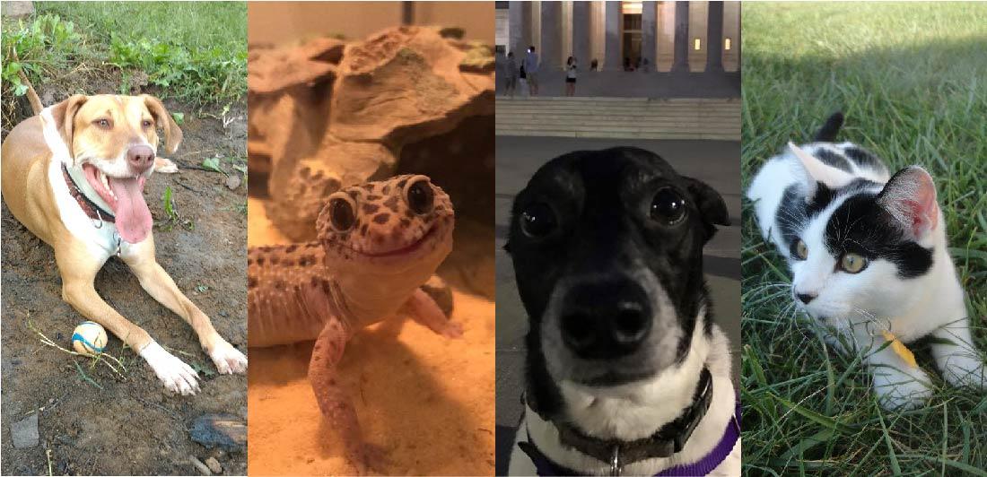 Historia Natural en Casa: Mascotas saludables - Explorando Porque la Salud de Nuestras Mascotas es Importante para la Familia